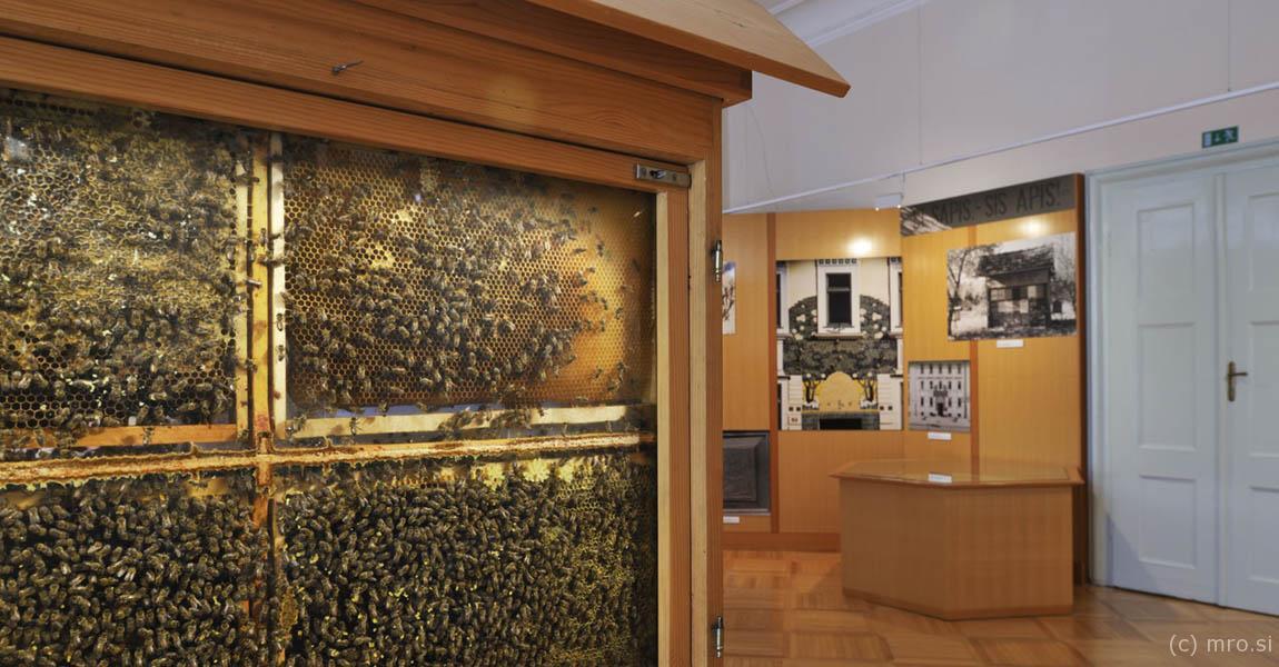 Čebelarski muzej v Radovljici